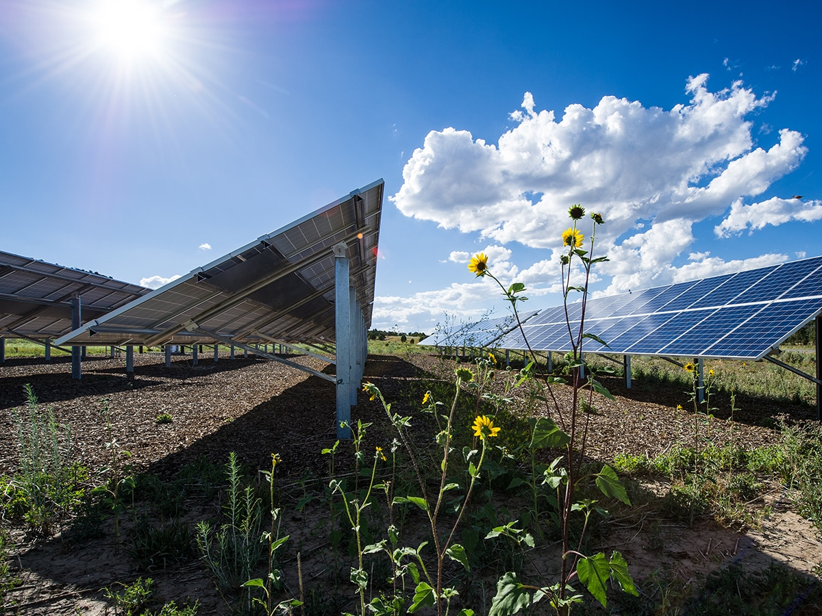 solar panels under a blue sky with flowers in the foreground