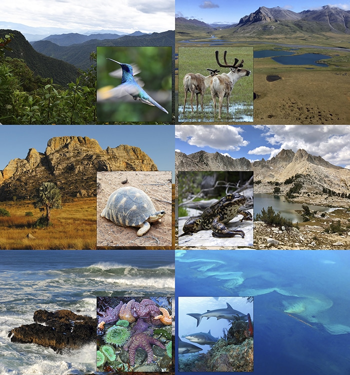 various images of wildlife with their corresponding environments