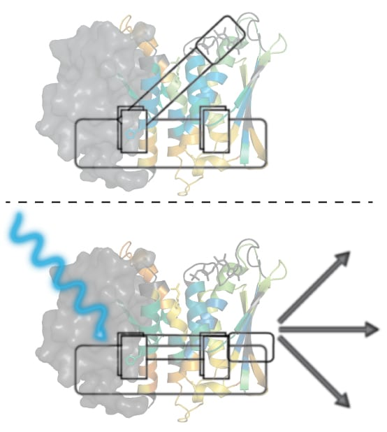 illustration: EL346 protein affected by blue light