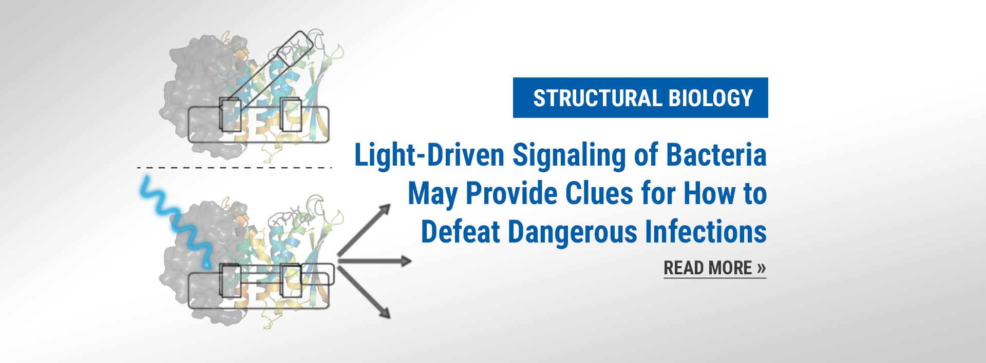 Structural Biology news: Light-Driven Signaling of Bacteria May Provide Clues for How to Defeat Dangerous Infections