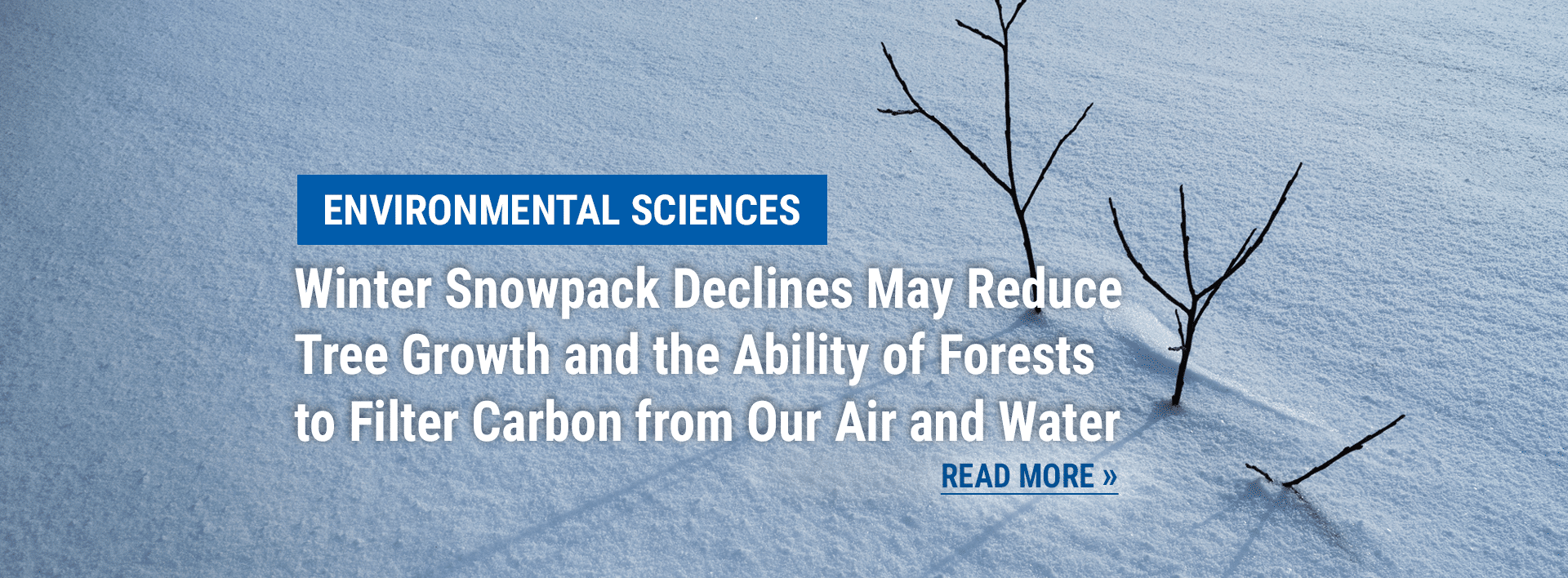 Environmental Science news: Study Shows Winter Snowpack Declines May Reduce Tree Growth and the Ability of Forests to Filter Carbon from Our Air and Water