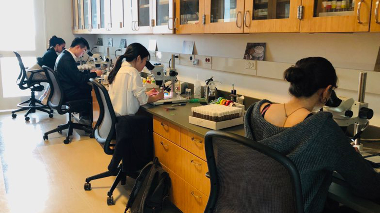 Researchers looking through microscopes in the Shafer Lab